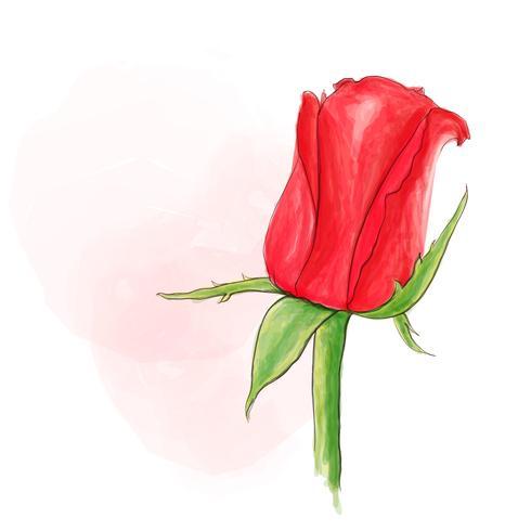 Einzelne rote Rose