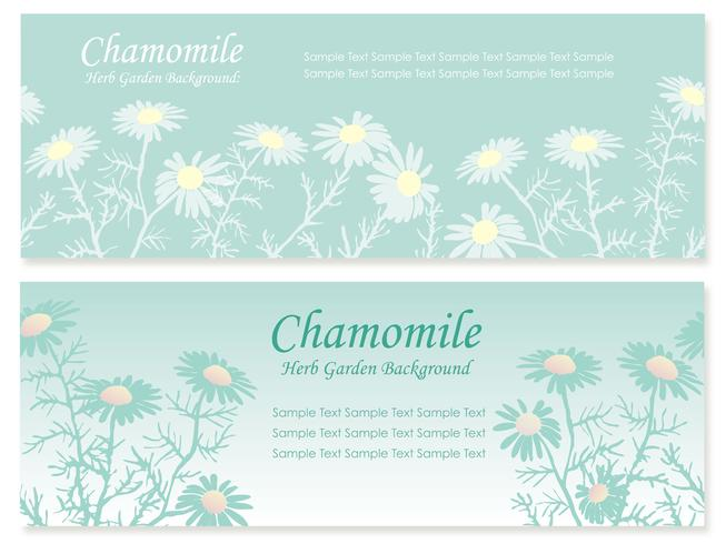 Set of two seamless vector background illustrations with chamomile.