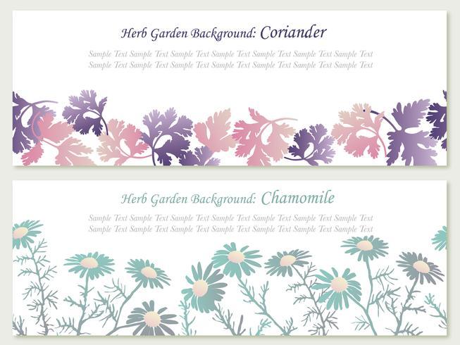 Ensemble de deux illustrations de fond transparente de vecteur avec des herbes: coriandre et camomille.