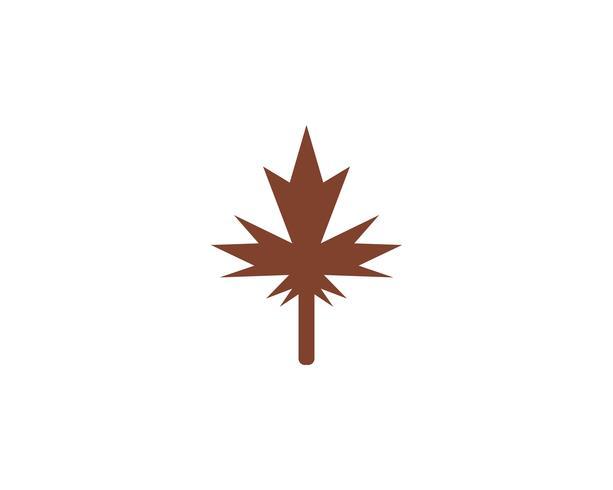 Maple leaf vector illustration