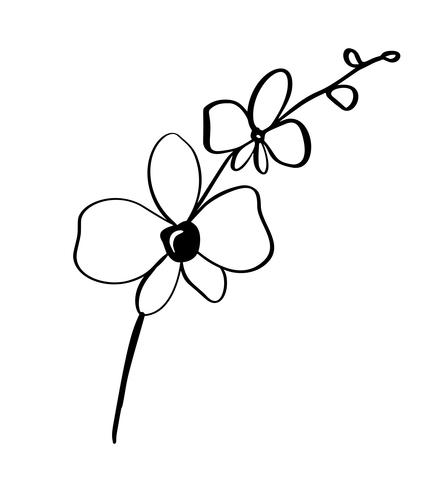 Beautiful monochrome vector floral background with orchid branch with flowers in graphic style. Illustration icon logo for design