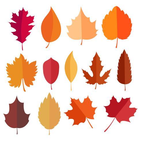 Autumn elements collection vector