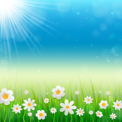 Priorità bassa della sorgente con i fiori bianchi nell'erba.