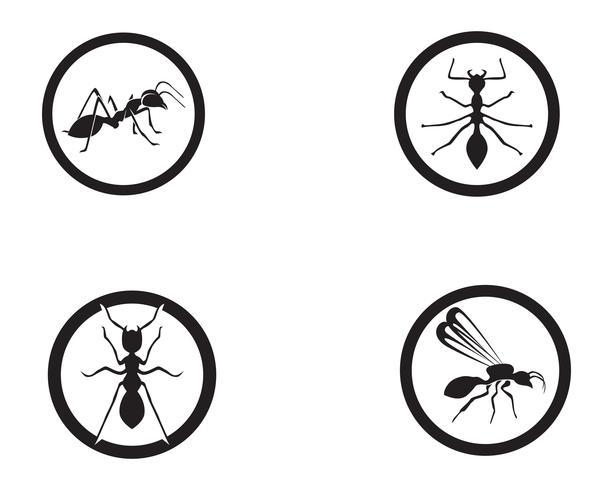 Ant Logo-Schablonenvektor-Illustrationsdesign