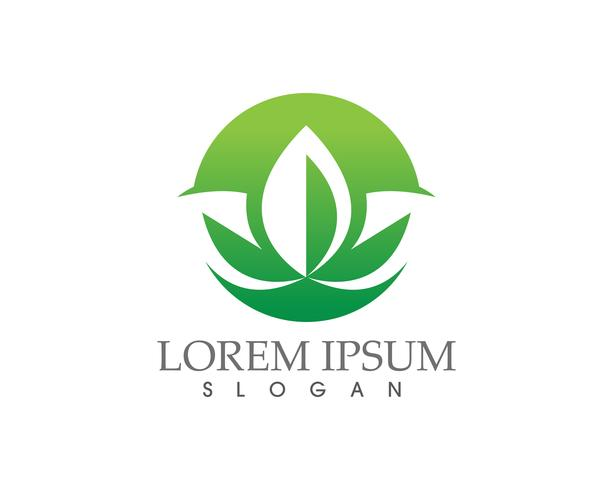 Logos der grünen Blattökologie-Naturelement-Vektorikone