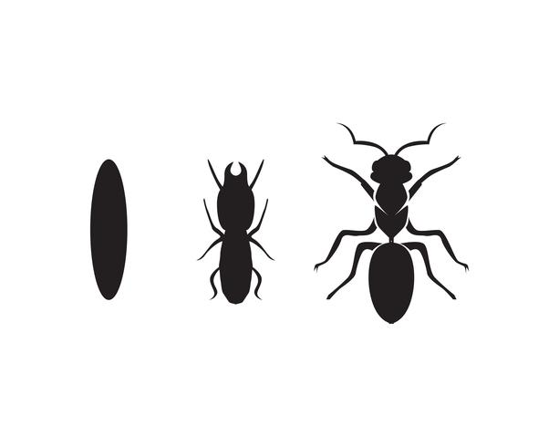 Ant Logo-Schablonenvektor-Illustrationsdesign