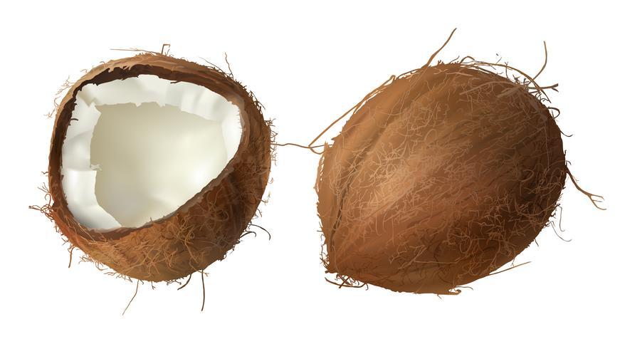 Casca de coco inteira e meio quebrada