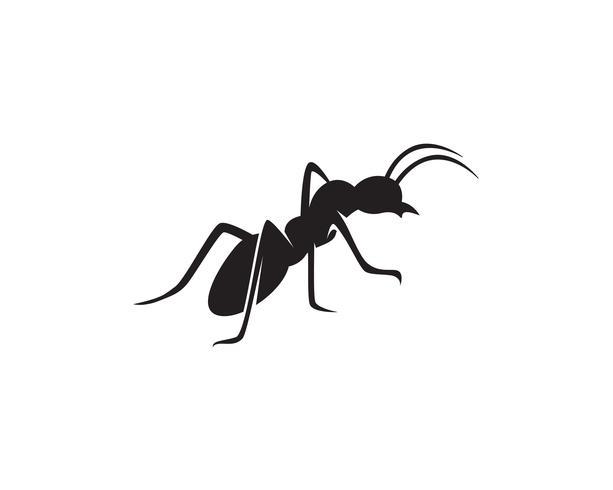 Progettazione dell'illustrazione di vettore del modello di Logo della formica