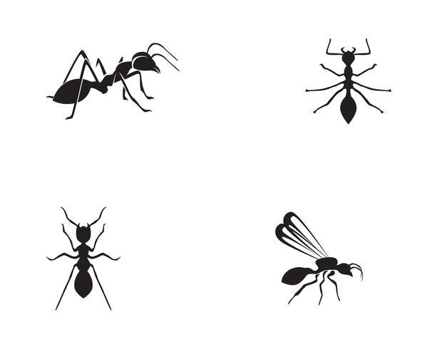 Ant Logo mall vektor illustration design