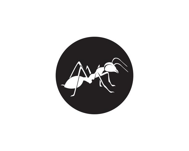 Ant Logo mall vektor illustration design