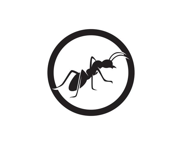 Diseño del ejemplo del vector de la plantilla del logotipo de la hormiga