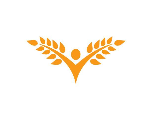 Agriculture wheat Logo Template,healthy life logo vector icon design,