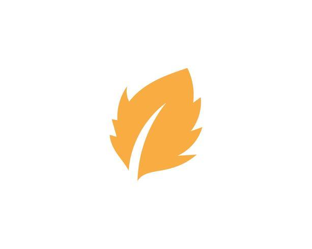 Maple leaf vektor illustration