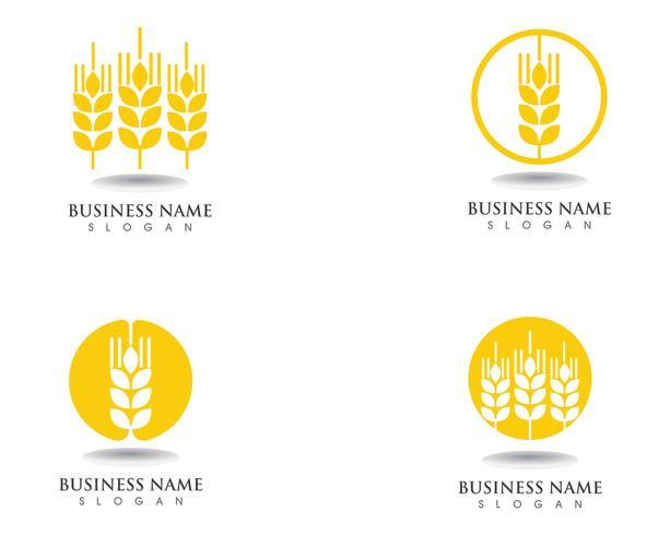 frumento Logo e simboli Modello icona disegno vettoriale