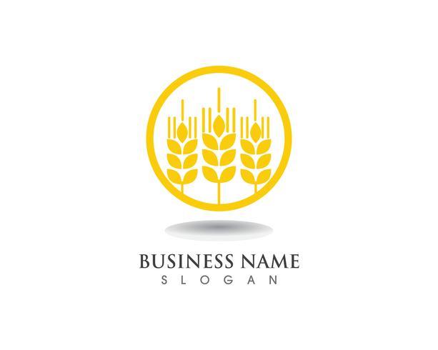 tarwe Logo en symbolen Sjabloon vector pictogram ontwerp