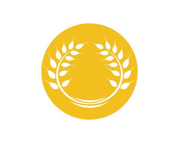 Trigo de agricultura Logo plantilla vector icono diseño