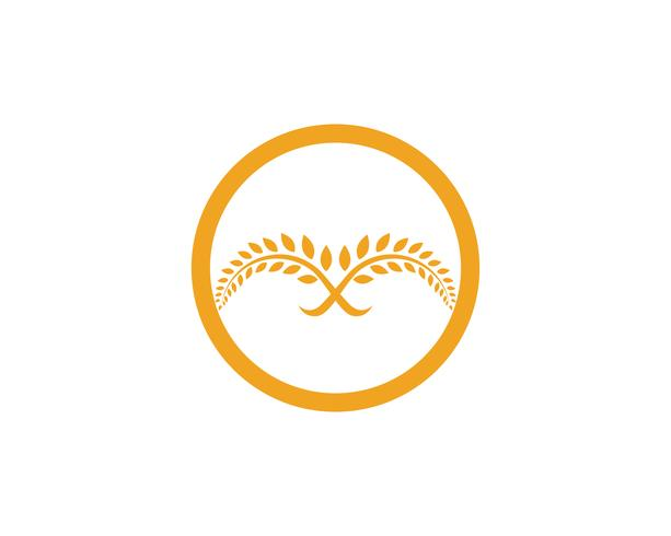 Agriculture wheat Logo Template vector icon design app