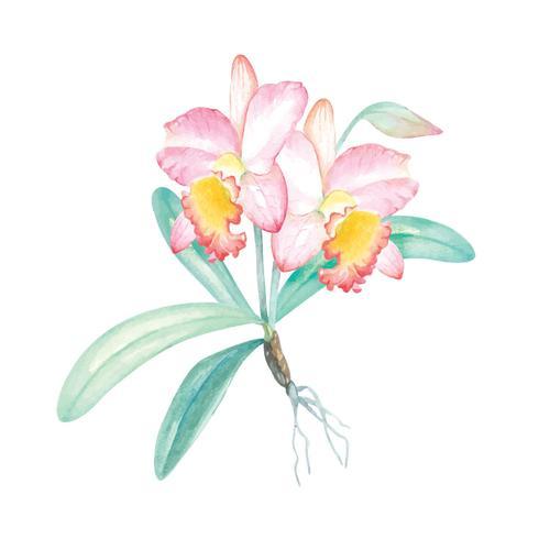 Aquarelle, peinture d'orchidée 1 vecteur