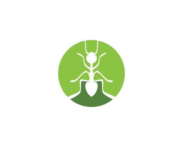 Ameisenkopf Logoschablonen-Vektorillustration