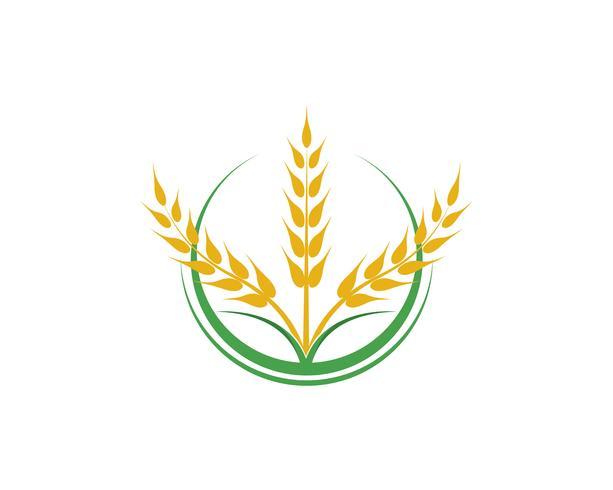 Vector de trigo de agricultura