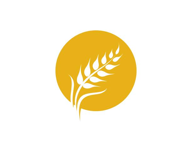 Landwirtschaft Weizen Vektor