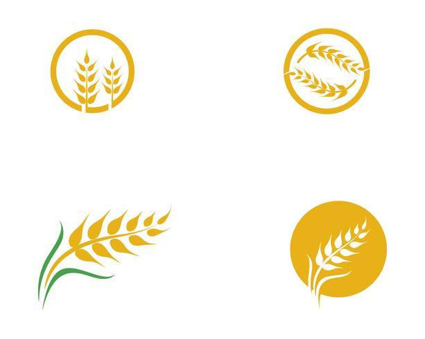 Vettore di grano agricoltura