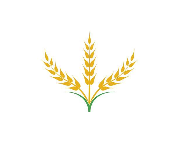 Vecteur de blé d'agriculture