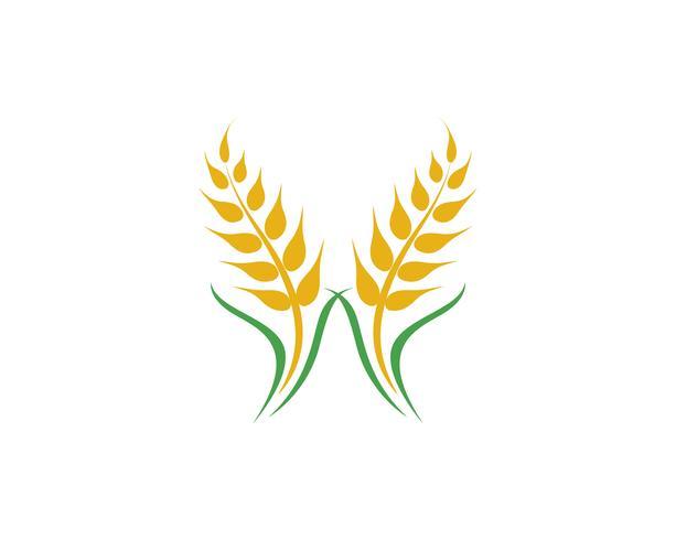 Landbouw tarwe vector