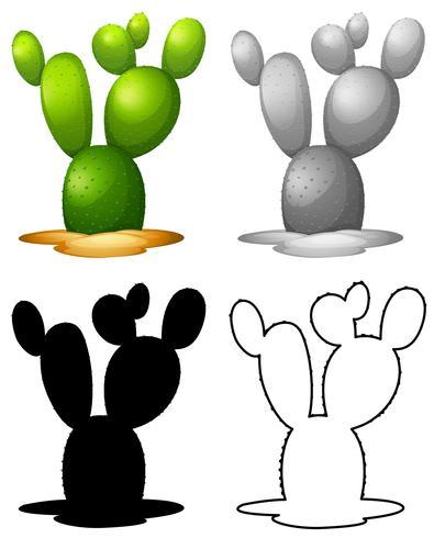 Set of nature cactus  vector