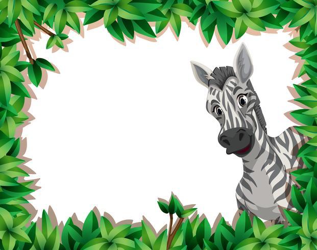 Zebra in nature frame vector