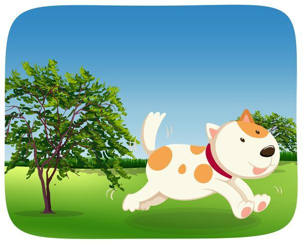En hund som rinner i parken