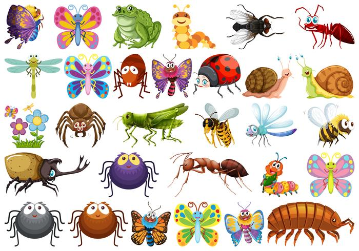 Set of insect character vector