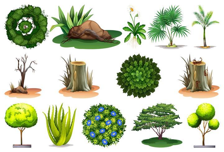 Sats av olika växter