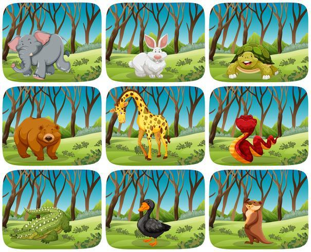 Set of animals in nature scenes vector