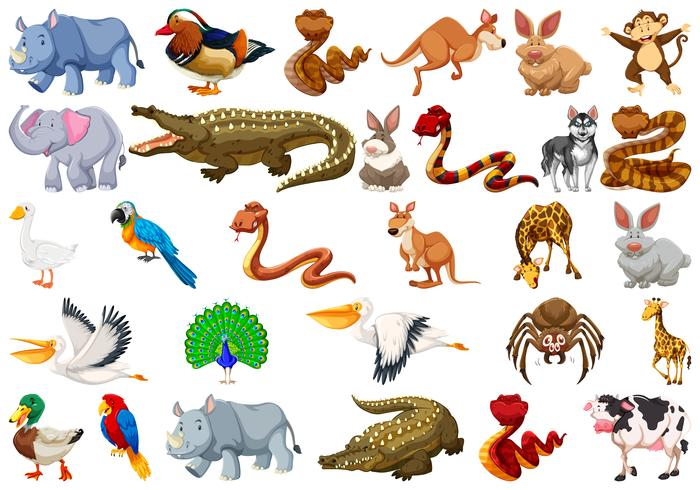 Set of animal character vector