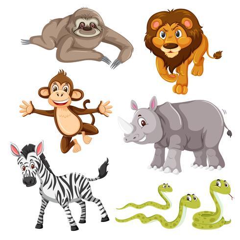 Set of wild animal vector