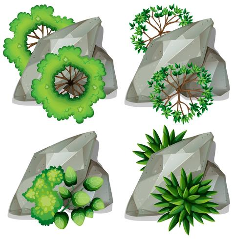 Set of nature rock and plant vector