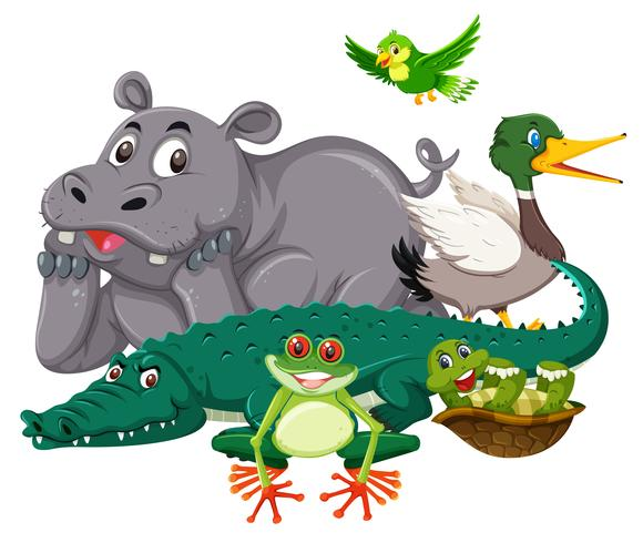 Group of wild animal vector