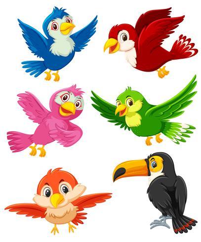 Set of bird character vector