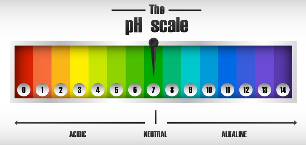 The ph scale diagram vector