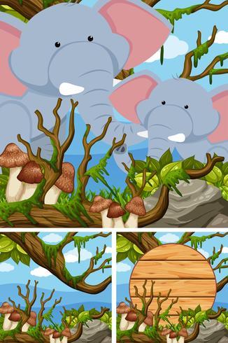 Elefantes en el bosque y cartel de madera. vector