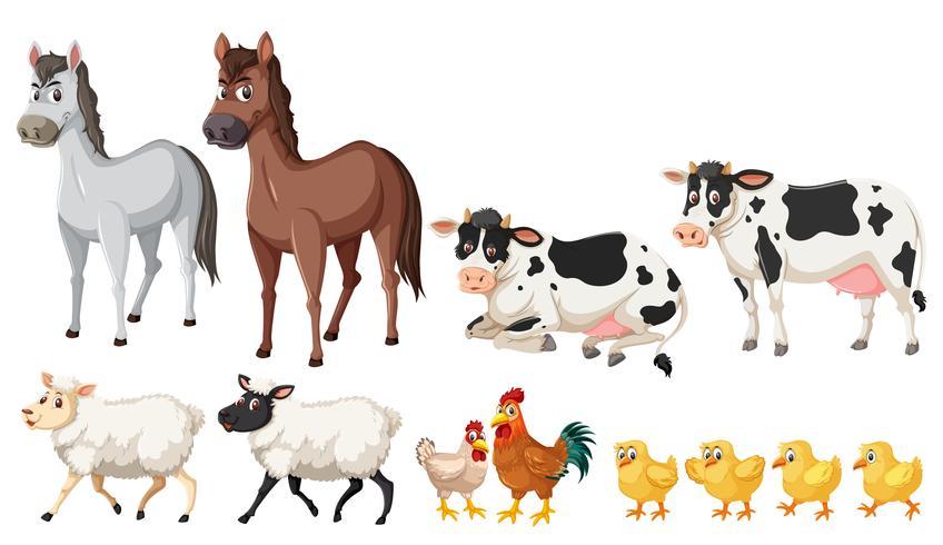 Um conjunto de animais de fazenda no fundo branco