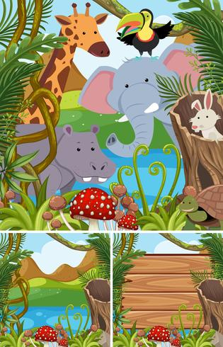 Cenas da natureza com muitos animais na floresta