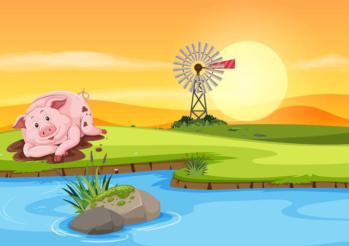 Cochon dans la boue