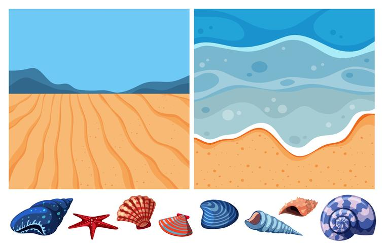 Dos escenas oceánicas con muchas conchas marinas.