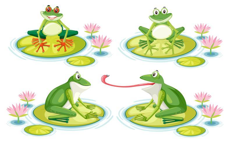 Conjunto de rana en almohadilla de loto vector