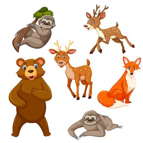 Sats av exotiska djur
