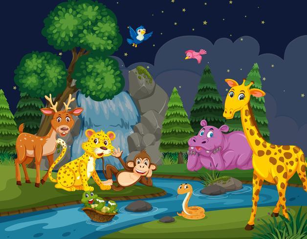 Vilda djur i skogen på natten