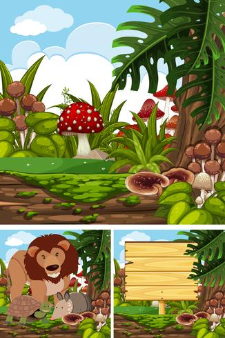 Three scenes with wild animals in forest
