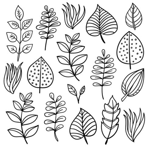Elementos botánicos dibujados a mano.